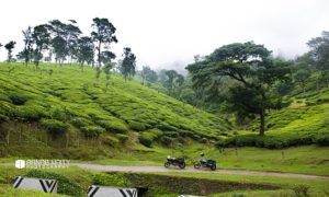 Bangalore To Munnar: From Mundane Highways to Misty Hills