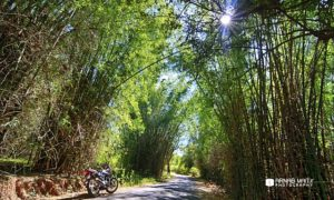The Weekly Frame – Ride through the Bamboo Forests